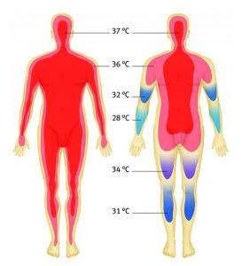 دما بر اساس اندام بدن