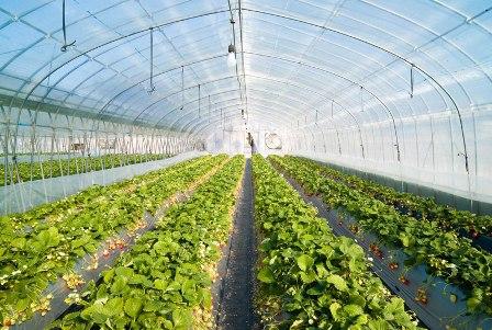 تجهیزات مورد استفاده در گلخانه ها